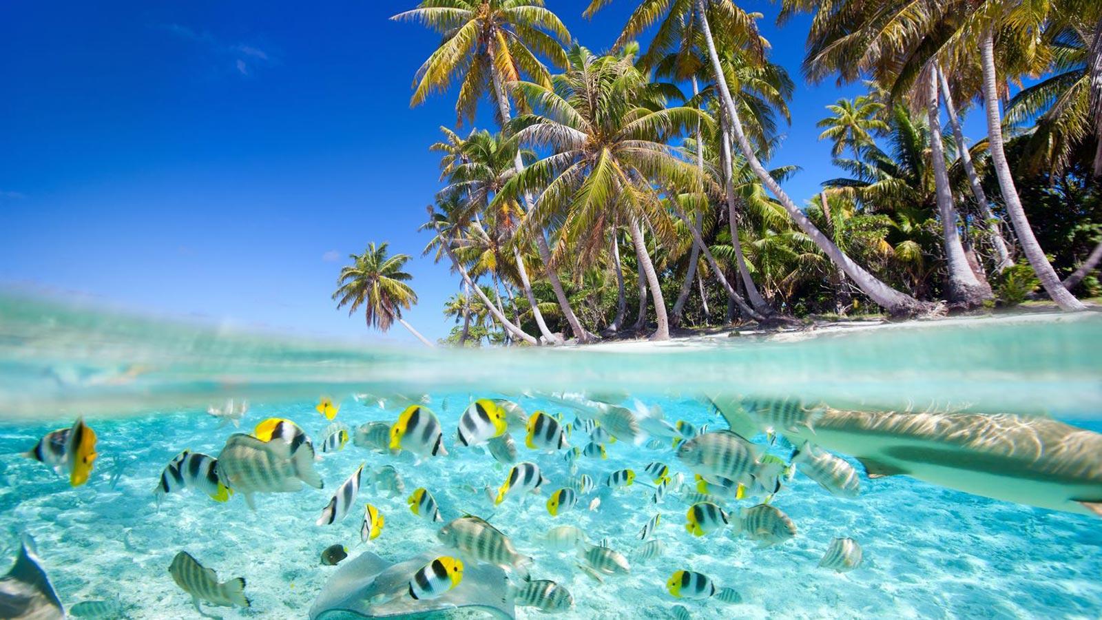 S jour maldives avec sensations du monde for Sejour complet maldives