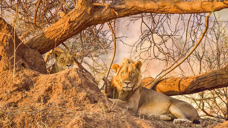 Du Cap au Parc Kruger