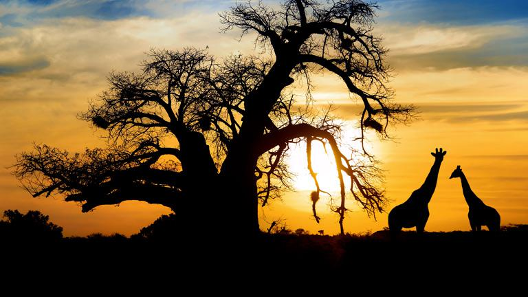 safari afrique australe avec sensations du monde. Black Bedroom Furniture Sets. Home Design Ideas