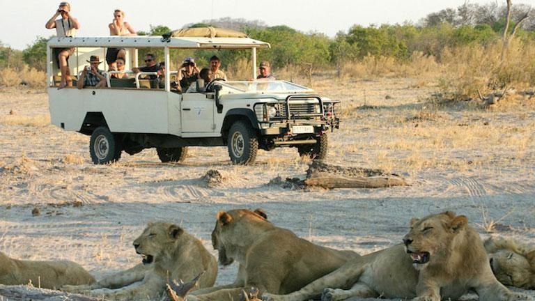 Immersion au Botswana