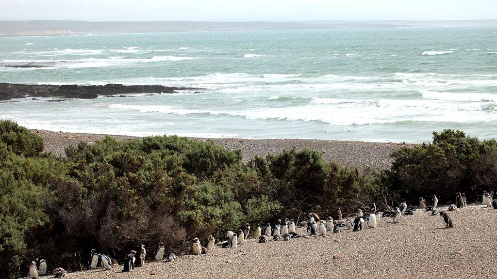 Visiter la Patagonie