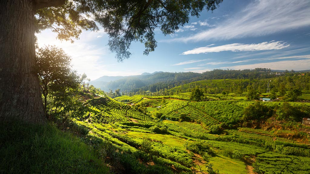 Partir au Sri Lanka